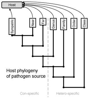 Type II experiment: Multiple pathogens infecting single target host