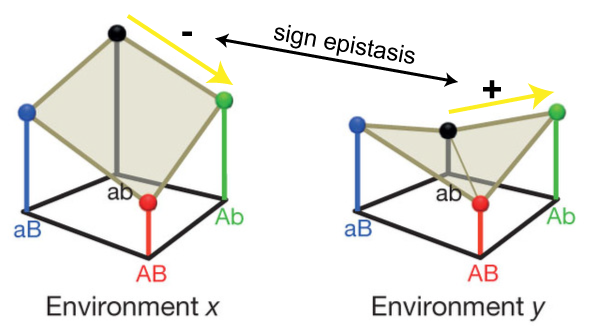 Sign Environmental Epistasis