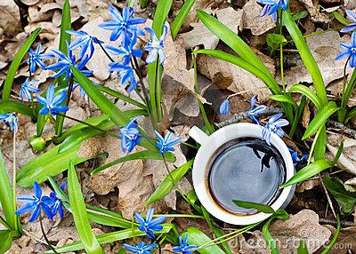 springcoffee