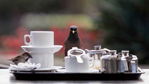birdscoffee