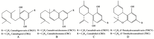 Figure 2. Chemical structure of some of the cannabinoids produced by Cannabis plants. Some of the cannabinoids in this picture are the decarboxylated form of the compounds, which occurs upon heating. Taken from Hillig and Mahlberg 2004.
