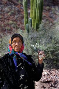 A Seri woman from Punta Cheueca, Sonora, Mexico. The Seri are as genetically distinct from other Native American people in Mexico as Europeans are from Asians (Moreno-Estrada et al. 2014). Image is by Tomás Castelazo, via Wikimedia Commons.