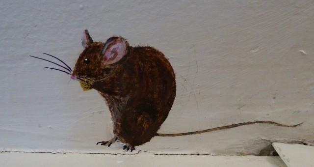 House mouse (by Wenfei Tong http://darwinsjackal.blogspot.com/)