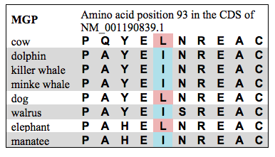 Parallel, independent amino acid changes in the MGP gene, which affects bone density. All marine mammals converged on the same isoleucine residue at position 93 from an ancestral leucine residue.