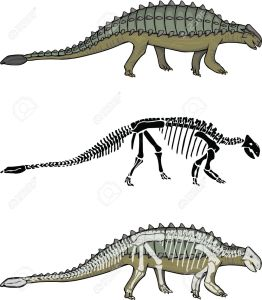 15174308-Ankylosaurus-with-matching-Skeleton-Stock-Vector