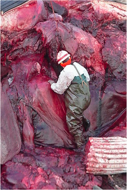 Who can resist a whale anatomist covered in blood, with a bloody hardhat & sexy fisherman's waders?