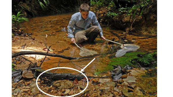 Andrew Hendry ‏ Student fishing for guppies in Trinidad just inches from a Fer de Lance. NOT STAGED.