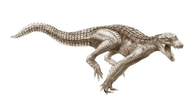 Ancient-crocodiles-DogCro-006
