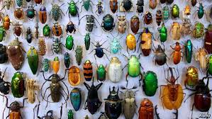 """An inordinate fondness of beetles"""