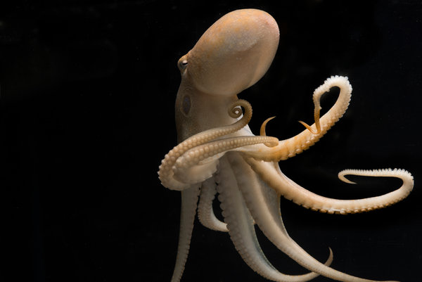 07tb-octopus01-articleLarge.jpg