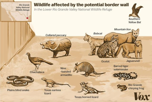 border_wall_wildlife.jpg