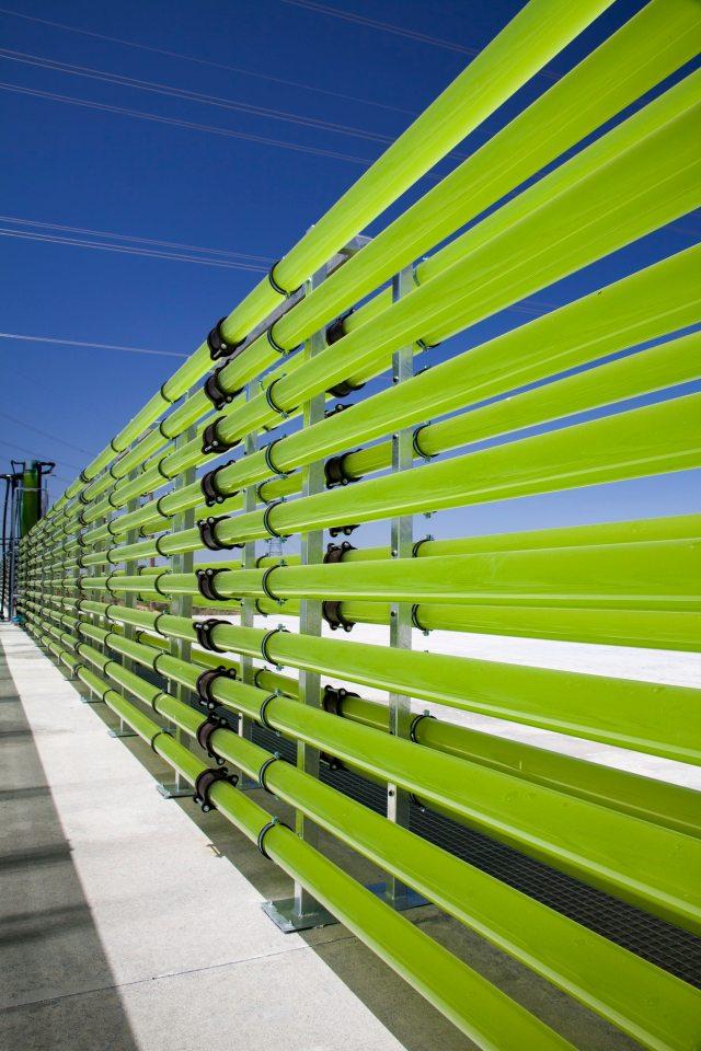 180221-algae-full.jpg